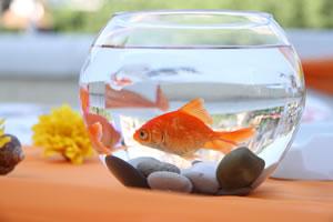 Как выбрать аквариум?