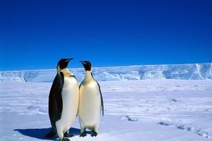 北極と南極の温度は同じですか?