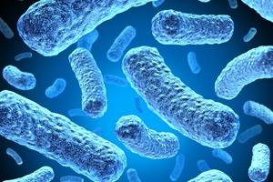 バクテリアはどうやって生まれたのですか?